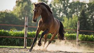Coachen met paarden voor natuurlijk leiderschap - Eleonore EQuus